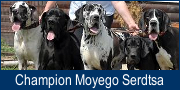 """Champion Moyego Serdtsa"" Kennel"