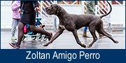 Zoltan Amigo Perro