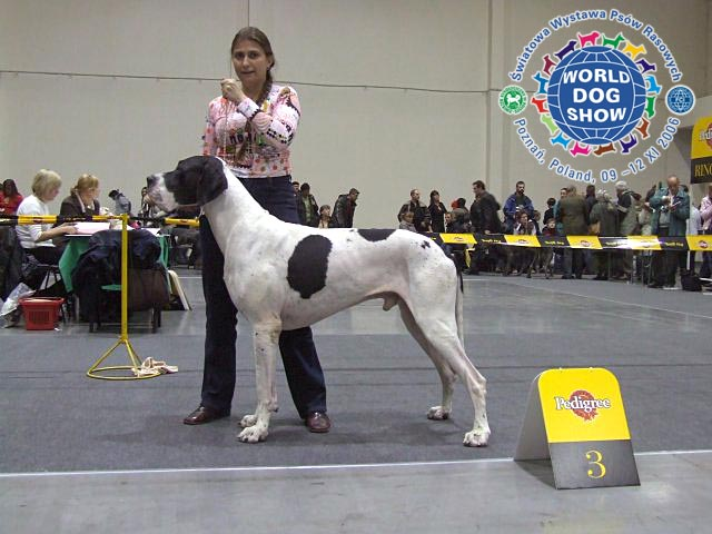 3rd excellent (from 21 dogs) on World Dog Show 2006 (Poznan, Poland), 11.11.2006, judge Jan Gajewsky (Poland)