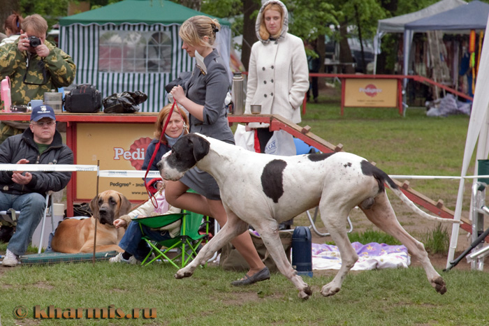 "Specialty ""Great Dane 2009"" - BIS Veteran"