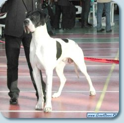 VII National Dog Show