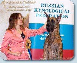 champion of Breed-2011
