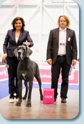 BENEFIS GRELL FAYERTOG -CAC, CACIB, Class Chempion Judge - Simon Boss