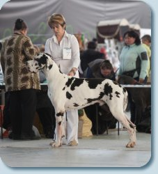 Fauna special Dog Show -2012, BISS-1, 18months old