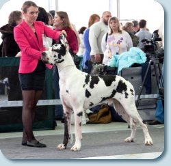 Fauna special Dog Show -2013, BOS, 2,5 years old