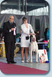 BISSPuppy-1 on Special Great Dane Show «Fauna 2012», judge Stefan Shinko (Slovenia), handler Agapova Olga
