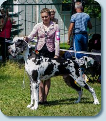 "14 month ex-1, BJ, BOB, BIS J of International Dog Show ""Smolensk fortress"" -2013"