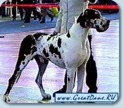 National monobreed Dog Show - 2003. BIS