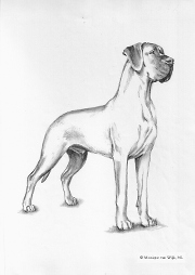 This illustration does not necessarily show the ideal example of the breed.